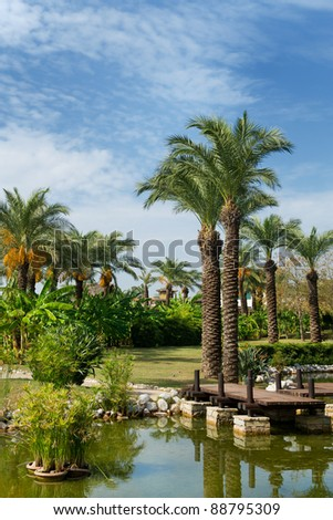 Tropical garden with palm trees and banana trees