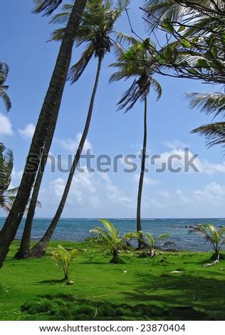 tropical grass covered beach