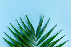 Tropical green leaf on a blue pastel background