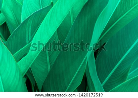 Tropical green leaf texture, Green leaves background nature dark green backdrop, Concept nature and plant tropical #1420172519