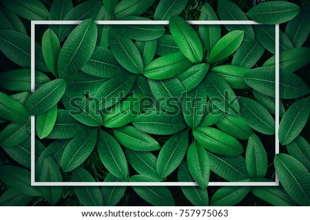 Tropical green leaf with water drop , creative paper card note layout concept . #757975063