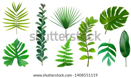 Tropical green leaves collection isolated on white background