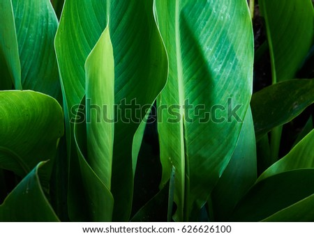 Tropical Green Leaves Landscape                                #626626100