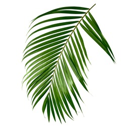 Tropical green palm leave , jungle leave floral pattern isolated on white background Copy space for text or design