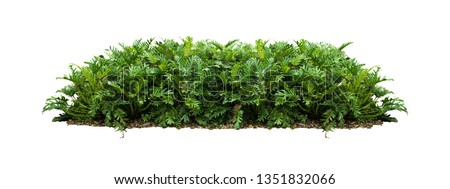 tropical green plant bush tree  isolated with clipping path on white background #1351832066