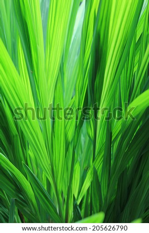 tropical green plant with back lighting