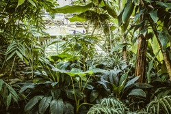 Tropical greenhouse glasshouse sunny interior full of fresh green plants. Modern interior architecture design. Natural Indoor decorative plants. Lush botanical garden. Beautiful spring background.