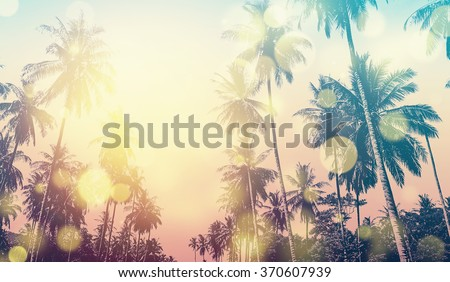 Tropical Hawaiian beach in sunset with coconut palm trees, panoramic view. Bokeh and vintage effect.