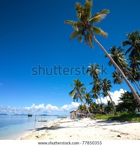 Tropical island in the sun with palm grove