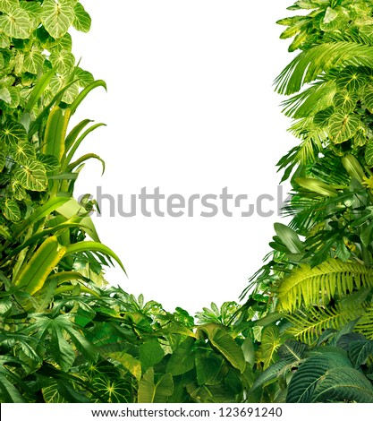 Tropical jungle as a blank frame with rich green plants as ferns and palm tree leaves found in southern hot climates as south America  Hawaii and Asia with a white isolated copy space center.