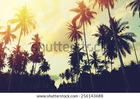 tropical jungle background with ...