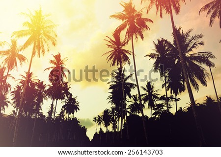 Tropical jungle background with palm tree silhouettes at sunset. Vintage effect. #256143703