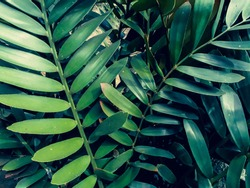 Tropical jungle foliage,dark green leaf nature background,vintage tone