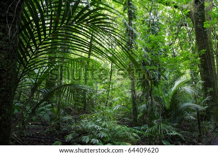 Tropical jungle forest.Natural background