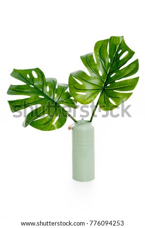 Tropical jungle leaf in green vase isolated on white background #776094253