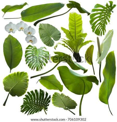tropical jungle leaves background