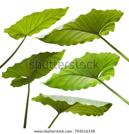 Tropical jungle leaves on white background