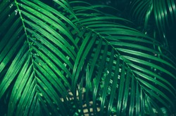tropical jungle palm foliage, dark green toned