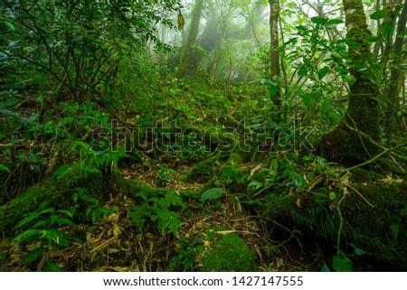 Tropical jungle,Rainforest, Tropical Rainforest, Tree, Tropical Climate, Springtime