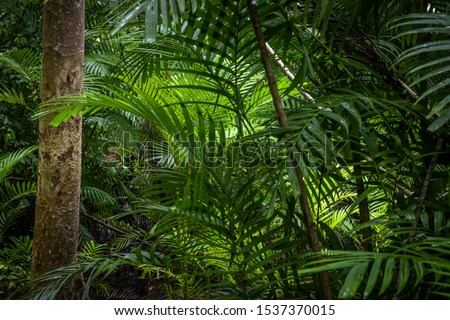 Tropical jungle, Tropical rainforest with different trees. #1537370015