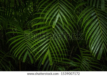 Tropical jungle, Tropical rainforest with different trees. #1539007172