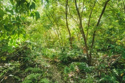 Tropical Jungle view with lush vegetation in Seychelles