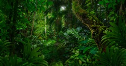 Tropical jungles of Southeast Asia in august