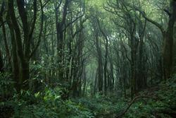 Tropical jungles of Southeast Asia. Subtropical forest landscape in Thailand. Tropical rainforest, Doi inthanon national park, Thailand. Selective Focus.