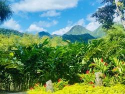 Tropical landscape. Balata garden, Martinique