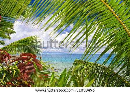 french polynesia  south pacific