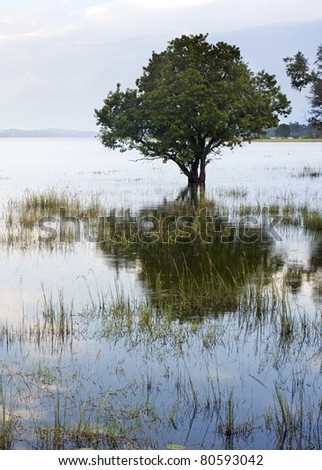Tropical landscape with lake and tree. Sri Lanka