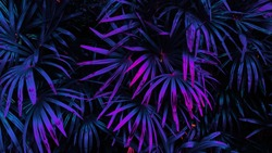 tropical leaf forest glow in the dark background. High contrast.