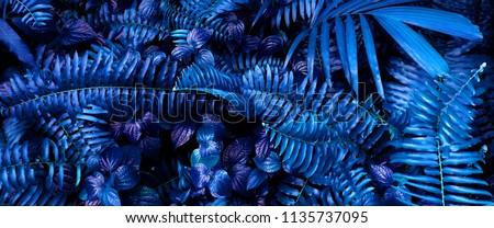 tropical leaf forest glow in the dark background. High contrast. #1135737095