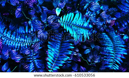tropical leaf forest glow in the dark background. High contrast