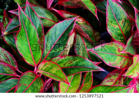 tropical leaf, lush green foliage, ornamental plant, nature background