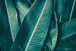 tropical leaf texture, dark green foliage nature background