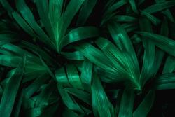 tropical leaf, thorn foliage, nature background, dark tone process