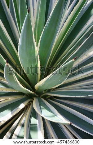 tropical leafs closeup