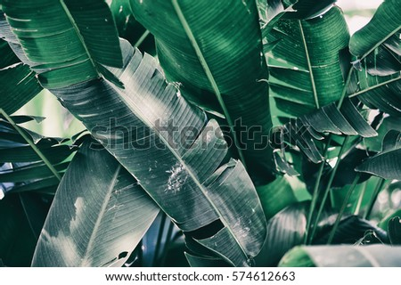 tropical leaves #574612663
