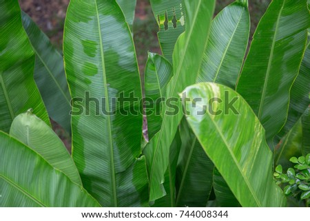 tropical leaves #744008344