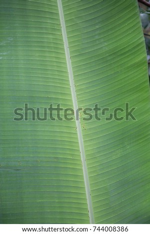 tropical leaves #744008386