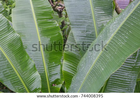 tropical leaves #744008395
