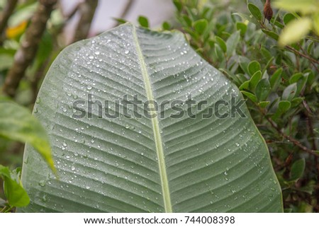 tropical leaves #744008398