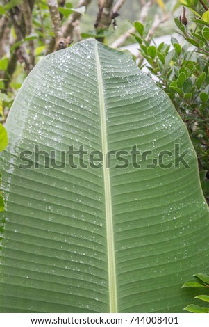 tropical leaves #744008401