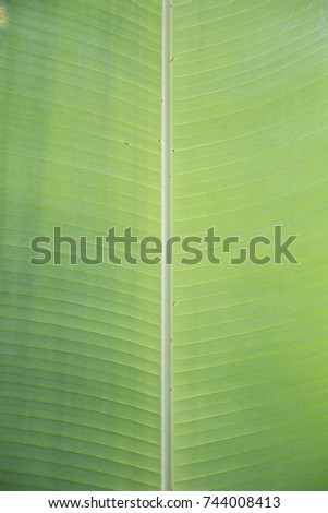 tropical leaves #744008413