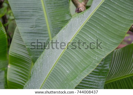 tropical leaves #744008437
