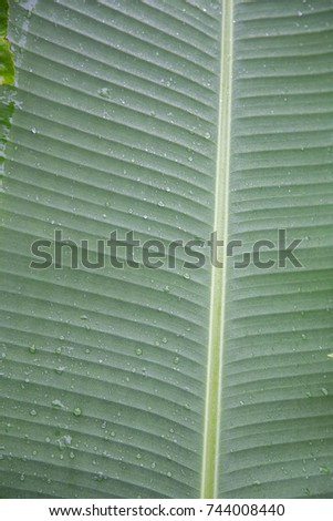 tropical leaves #744008440