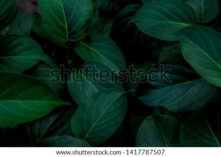 Photo of  tropical leaves, abstract green leaves texture, nature background