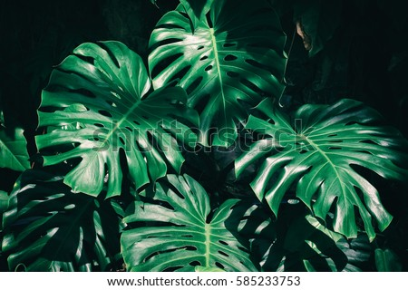 tropical leaves background #585233753