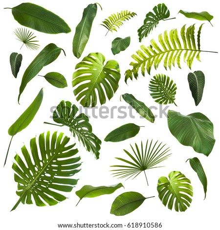 Tropical Leaves Background #618910586